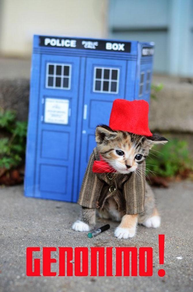 Pisici costumate in personaje celebre - Poza 4