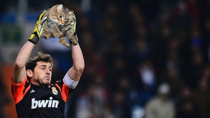 Sportul cu pisica in loc de minge - Poza 2