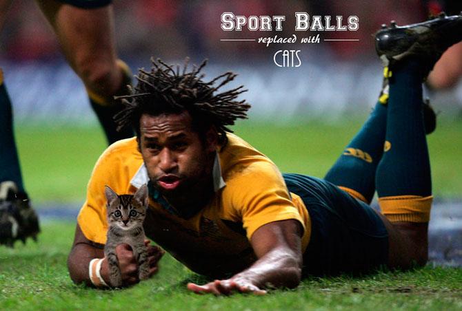 Sportul cu pisica in loc de minge - Poza 5