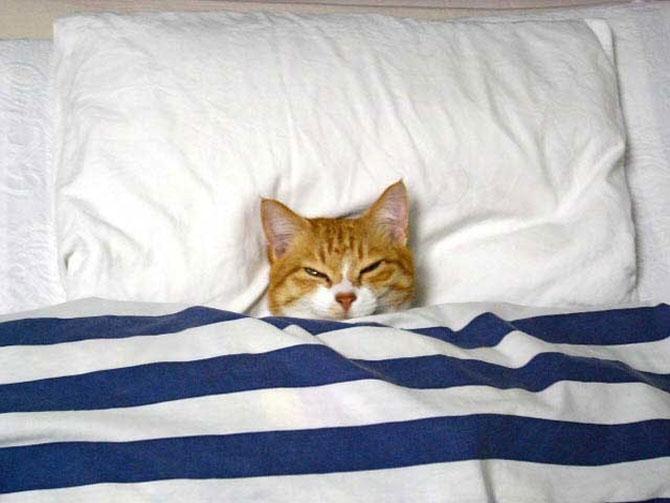 10 pisici prea adormite ca sa le pese - Poza 1