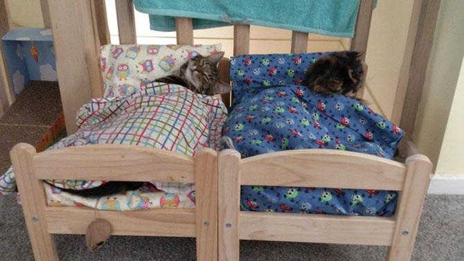 10 pisici prea adormite ca sa le pese - Poza 2