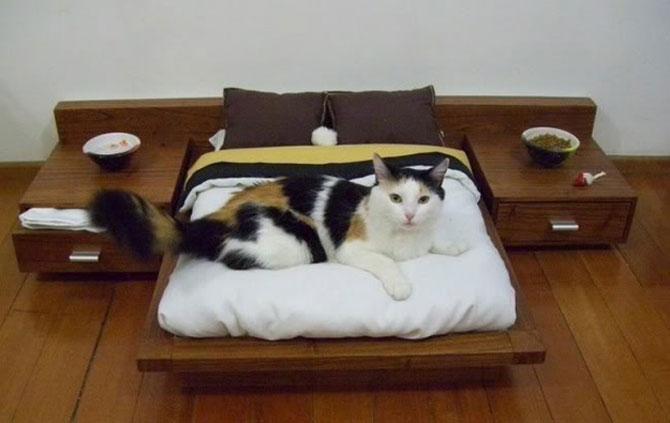 10 pisici prea adormite ca sa le pese - Poza 3