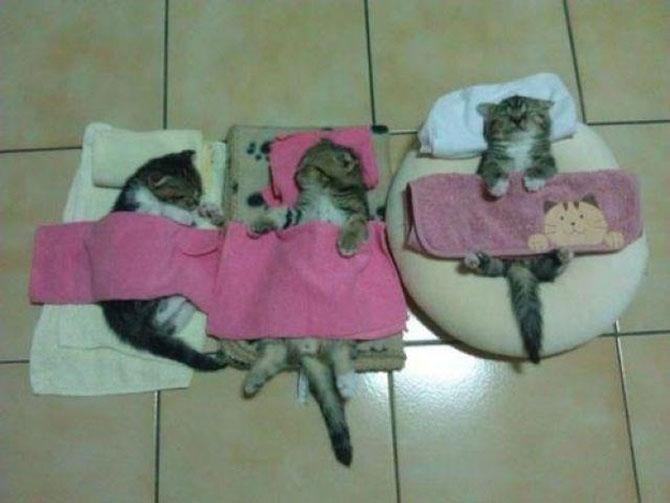 10 pisici prea adormite ca sa le pese - Poza 5