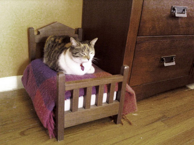 10 pisici prea adormite ca sa le pese - Poza 6
