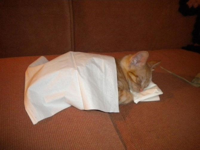 10 pisici prea adormite ca sa le pese - Poza 7
