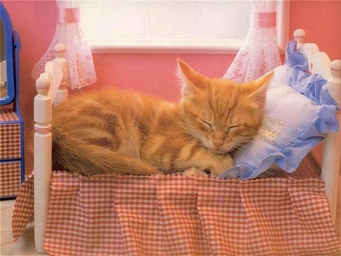 10 pisici prea adormite ca sa le pese - Poza 8