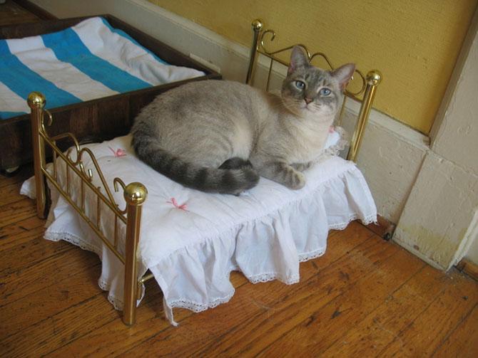 10 pisici prea adormite ca sa le pese - Poza 9
