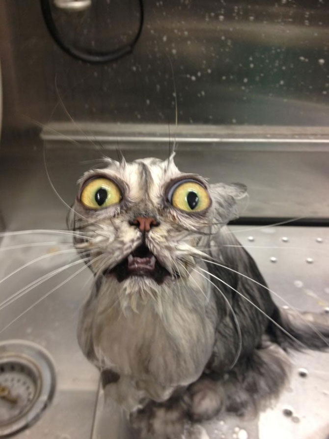 8 pisici pline de regrete