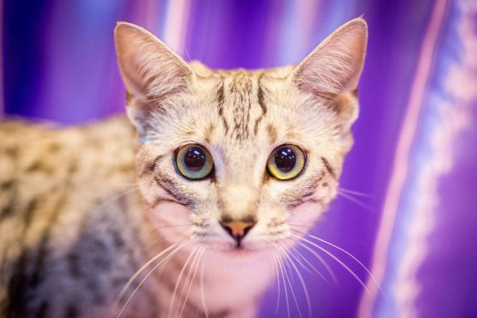 Cele mai frumoase pisici ale anului 2014 - Poza 3