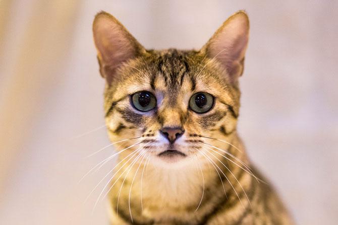 Cele mai frumoase pisici ale anului 2014 - Poza 4