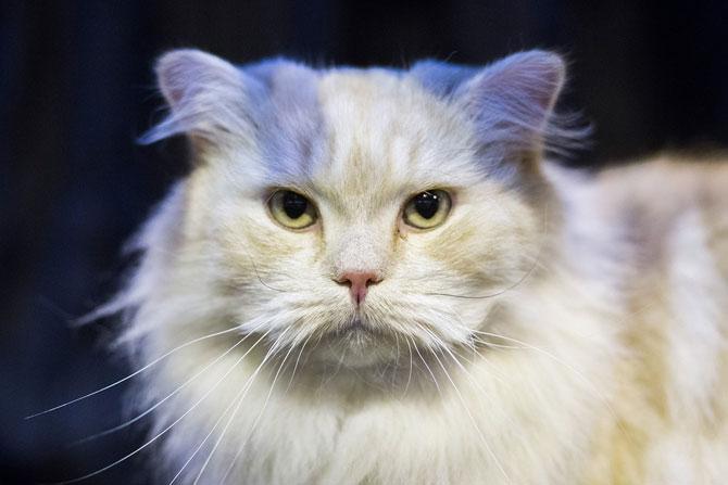 Cele mai frumoase pisici ale anului 2014 - Poza 5