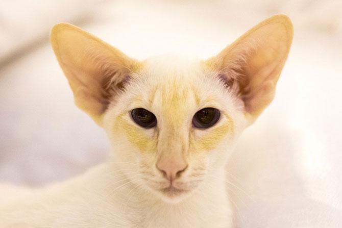 Cele mai frumoase pisici ale anului 2014 - Poza 6