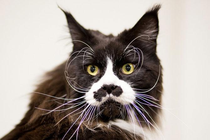 Cele mai frumoase pisici ale anului 2014 - Poza 8