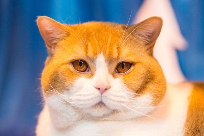 Cele mai frumoase pisici ale anului 2014 - Poza 9