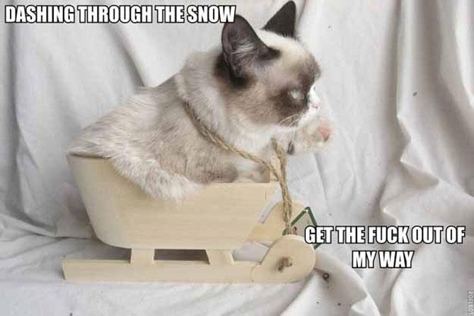 12 dovezi ca pisicile urasc Craciunul - Poza 9