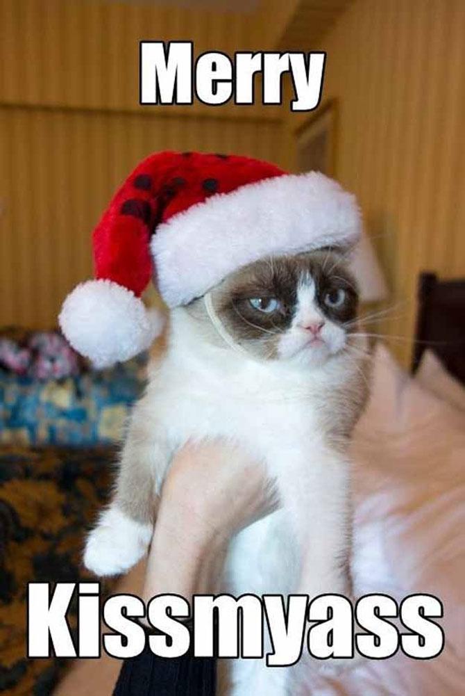 12 dovezi ca pisicile urasc Craciunul - Poza 11