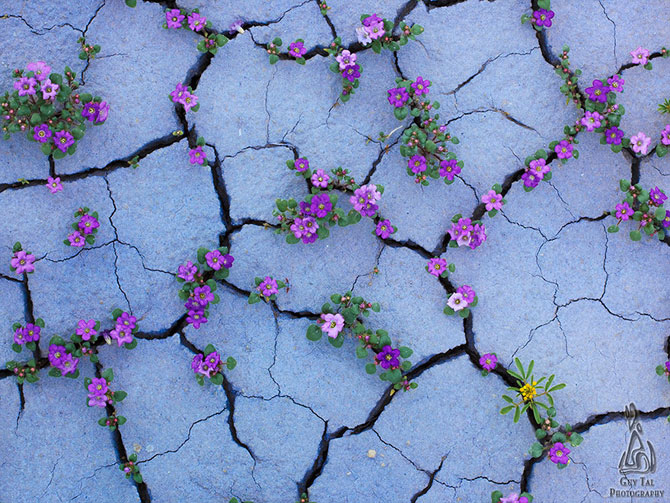Frumusetea naturii in 13 poze cu flori in locuri neasteptate - Poza 1
