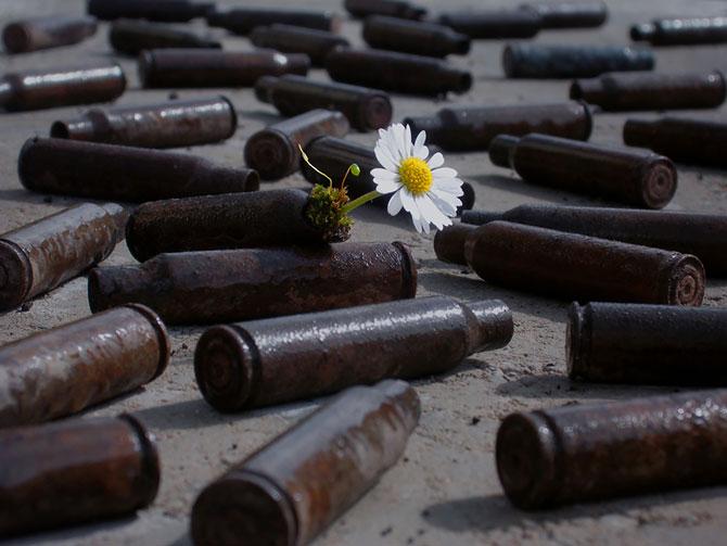 Frumusetea naturii in 13 poze cu flori in locuri neasteptate - Poza 2