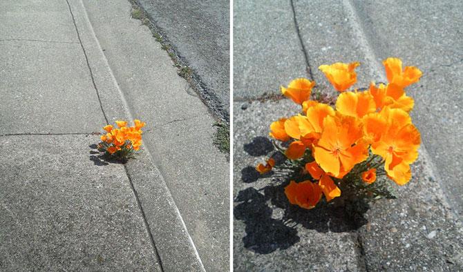 Frumusetea naturii in 13 poze cu flori in locuri neasteptate - Poza 4
