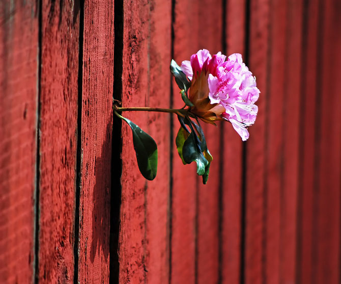 Frumusetea naturii in 13 poze cu flori in locuri neasteptate - Poza 10
