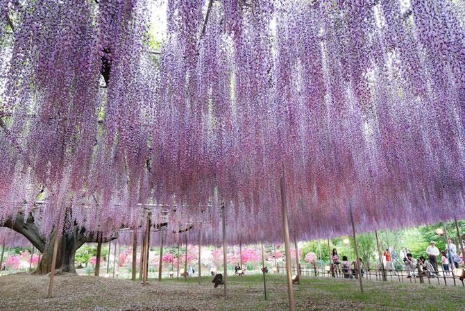 O umbrela de flori din Japonia - Poza 1