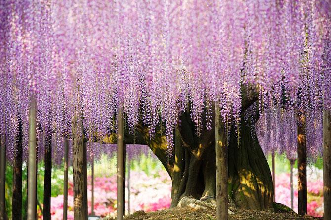 O umbrela de flori din Japonia - Poza 2