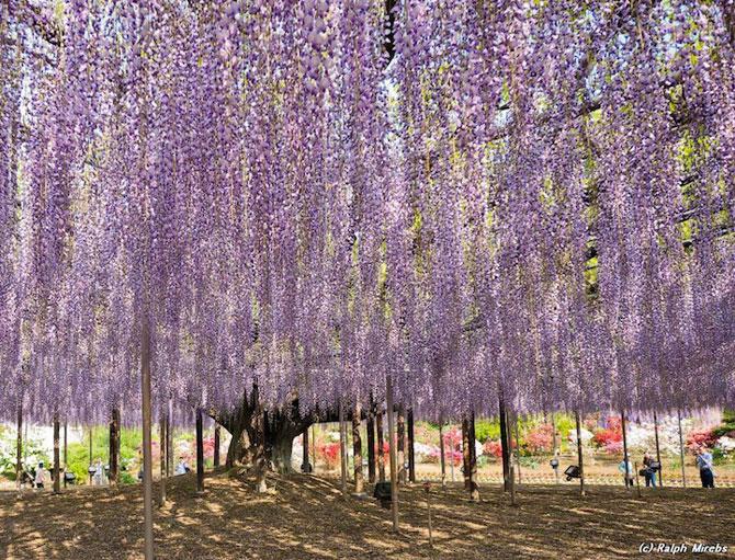 O umbrela de flori din Japonia - Poza 3