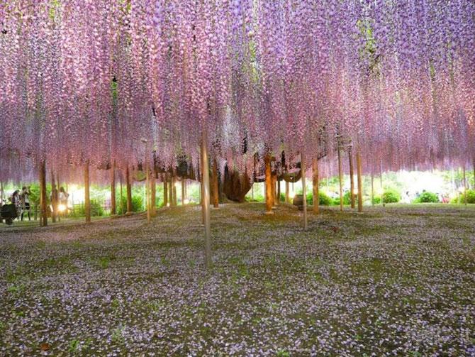 O umbrela de flori din Japonia - Poza 4
