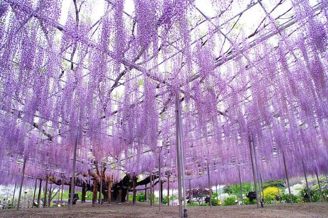 O umbrela de flori din Japonia - Poza 5