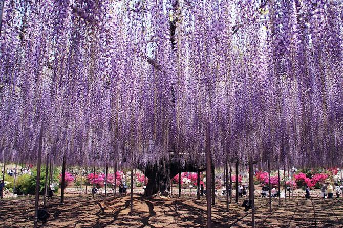 O umbrela de flori din Japonia - Poza 6