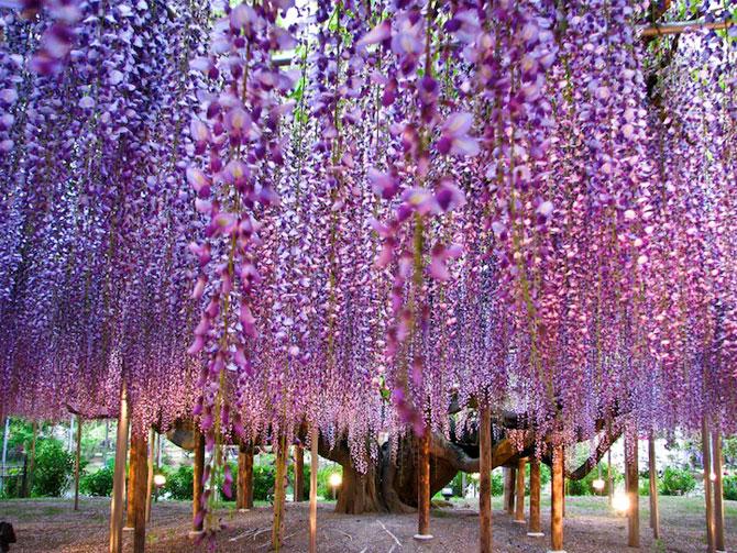 O umbrela de flori din Japonia - Poza 7
