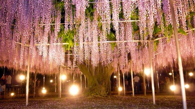 O umbrela de flori din Japonia - Poza 8