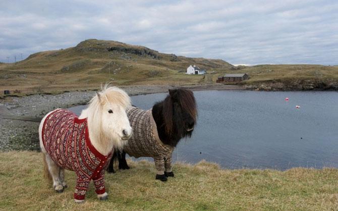 Poneii-ambasadori ai Scotiei