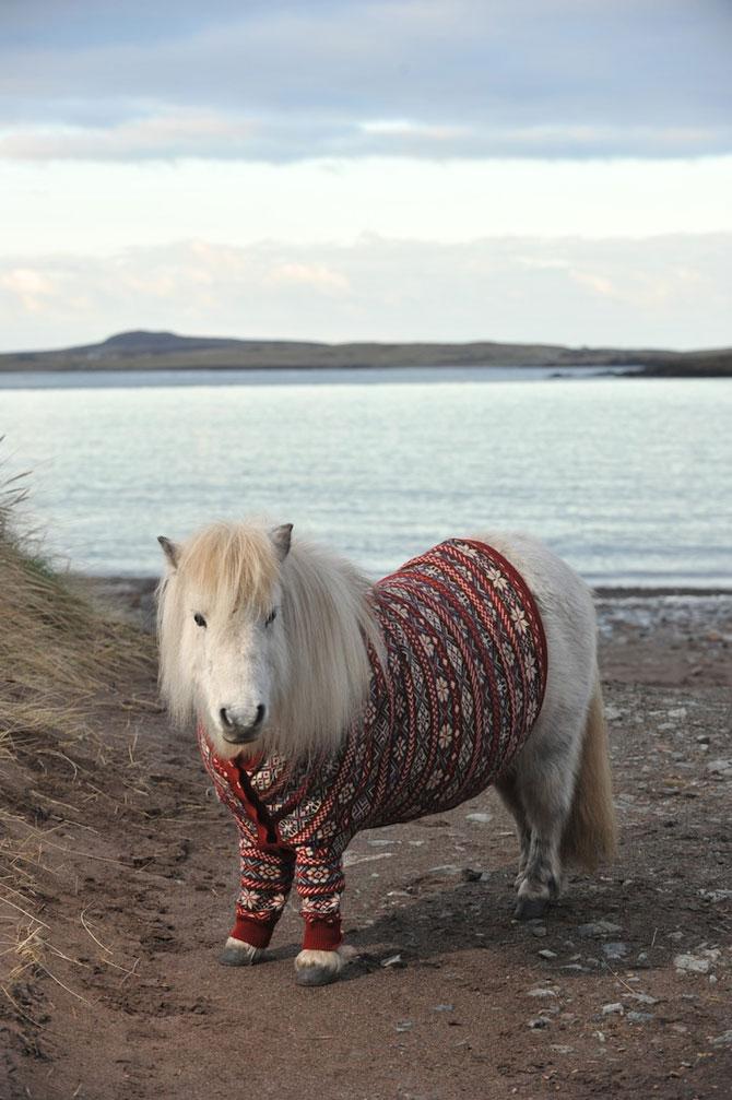 Poneii-ambasadori ai Scotiei - Poza 7