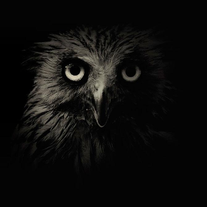 Portrete misterioase in alb-negru, cu animalele de la zoo - Poza 1