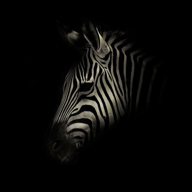 Portrete misterioase in alb-negru, cu animalele de la zoo - Poza 4