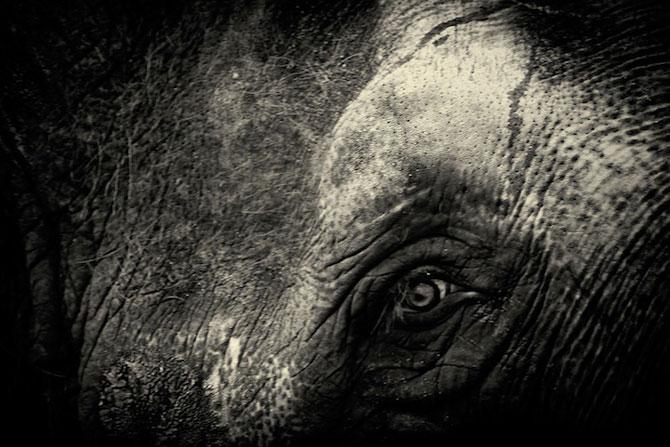 Portrete misterioase in alb-negru, cu animalele de la zoo - Poza 5