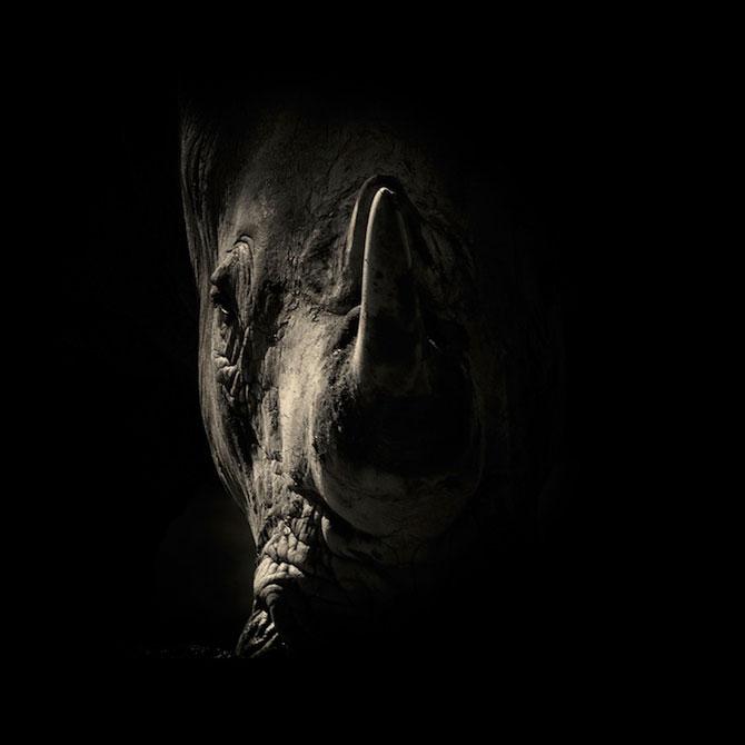 Portrete misterioase in alb-negru, cu animalele de la zoo - Poza 6