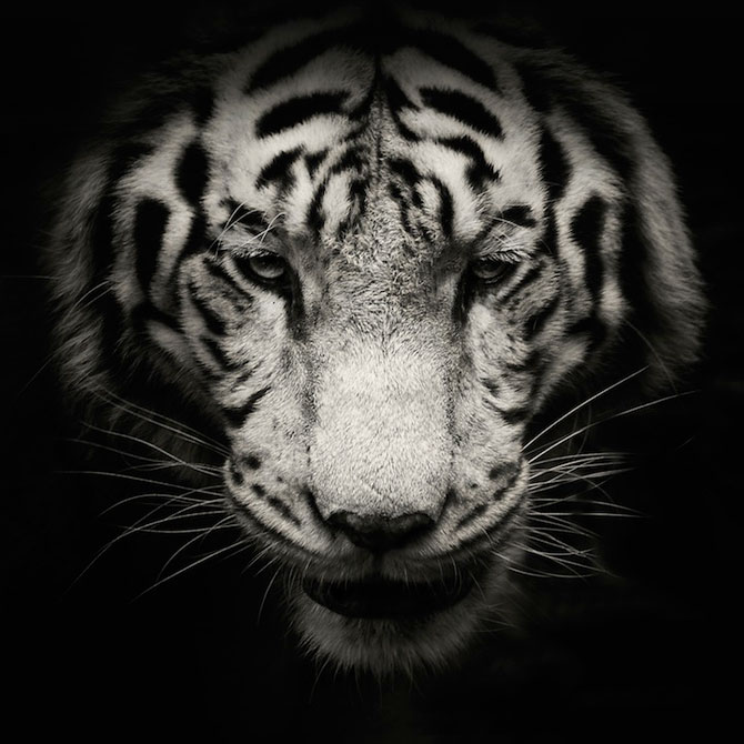 Portrete misterioase in alb-negru, cu animalele de la zoo - Poza 8