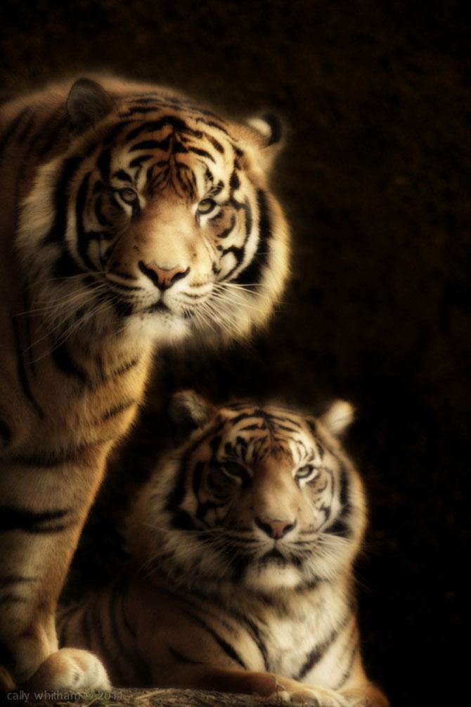 Portrete de animale umanizate, de Cally Whitham - Poza 1
