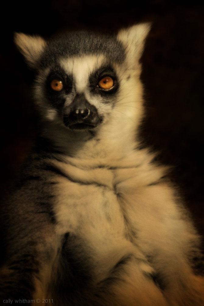 Portrete de animale umanizate, de Cally Whitham - Poza 3