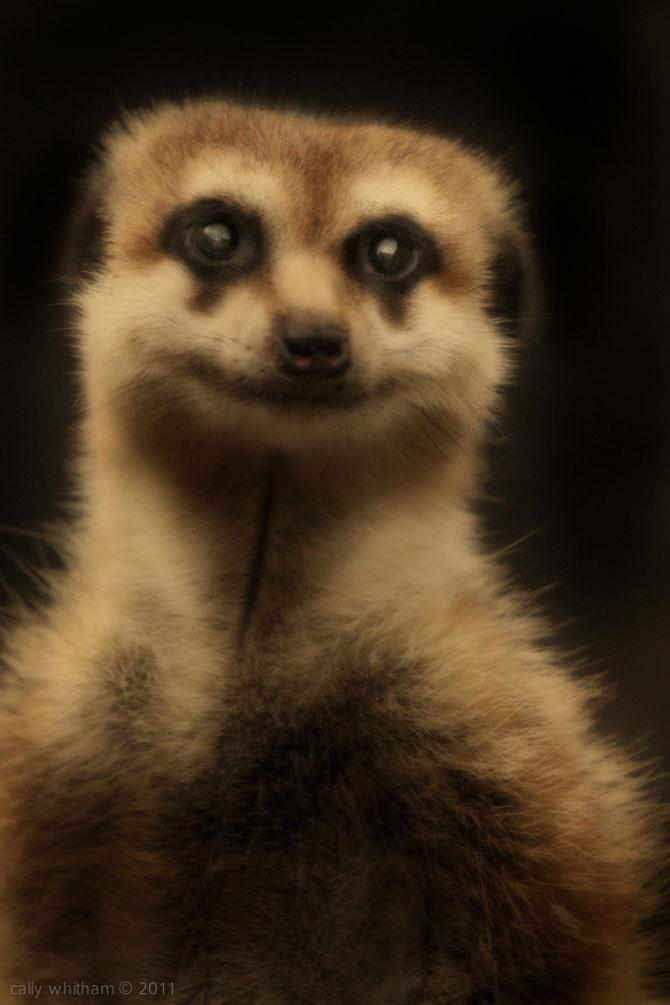 Portrete de animale umanizate, de Cally Whitham - Poza 4
