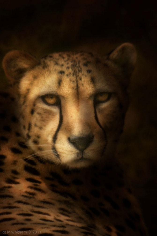 Portrete de animale umanizate, de Cally Whitham - Poza 5