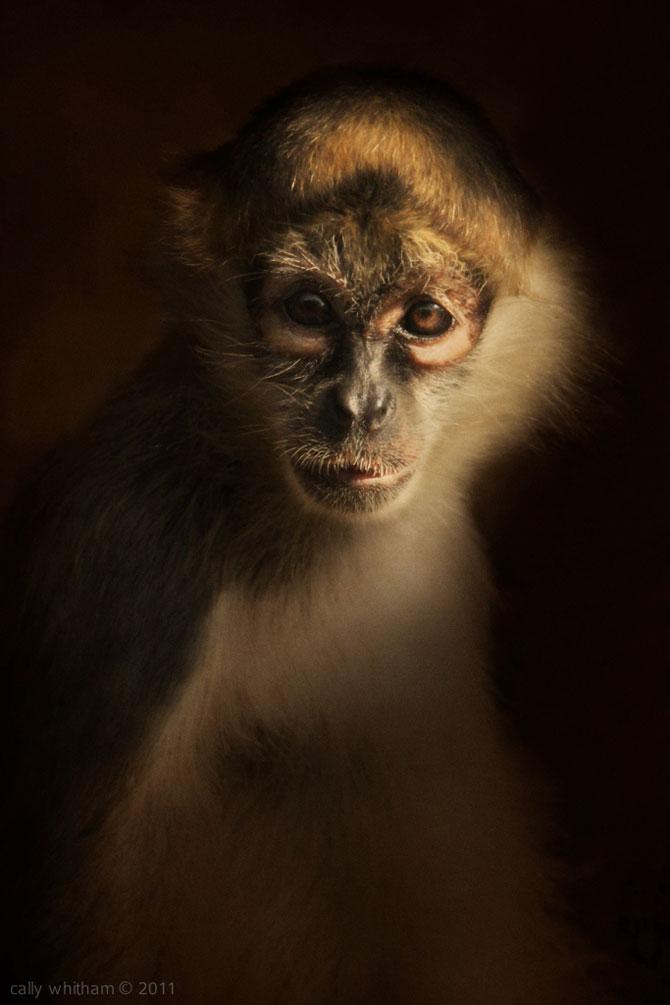 Portrete de animale umanizate, de Cally Whitham - Poza 6