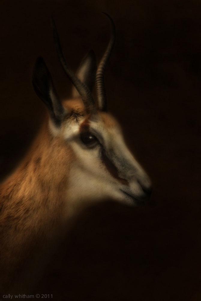 Portrete de animale umanizate, de Cally Whitham - Poza 10