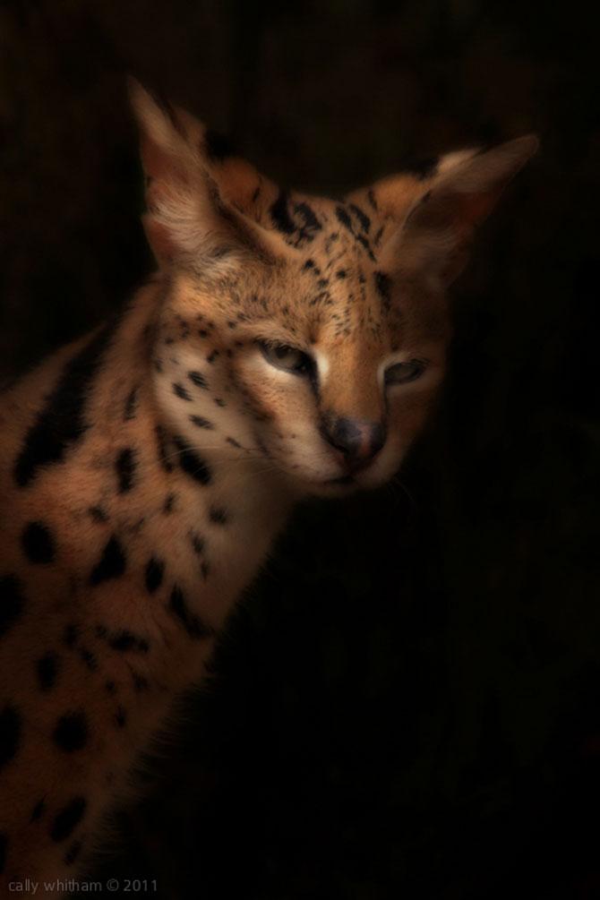 Portrete de animale umanizate, de Cally Whitham - Poza 11