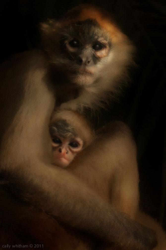 Portrete de animale umanizate, de Cally Whitham - Poza 12
