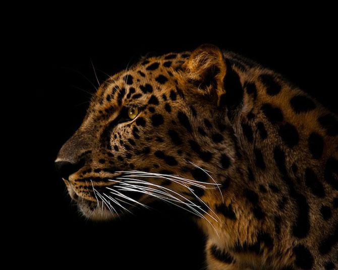 Portretist de animale: Joshua Arlington - Poza 1