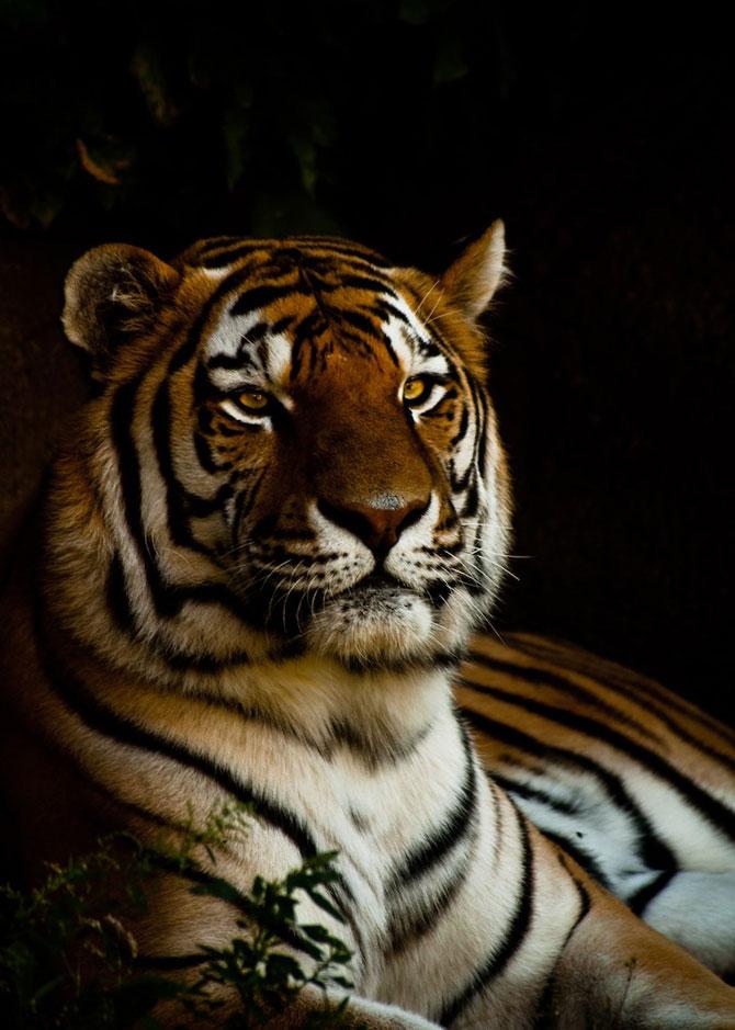 Portretist de animale: Joshua Arlington - Poza 2