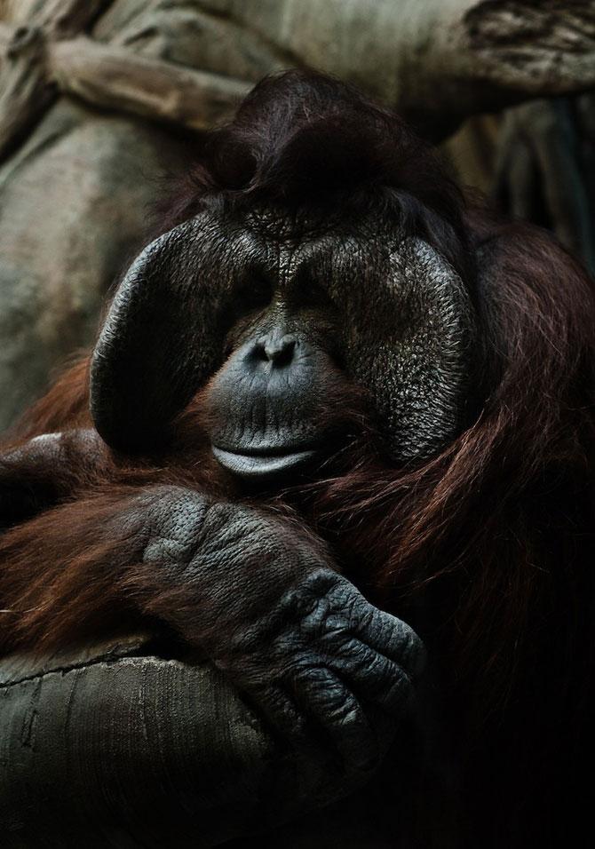 Portretist de animale: Joshua Arlington - Poza 3